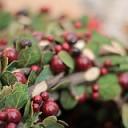 Natale in trentino: i mercatini