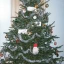 Storia e tradizione dell'albero di Natale